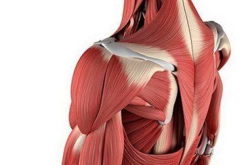 Боль в мышцах после тренировки: почему и что делать?