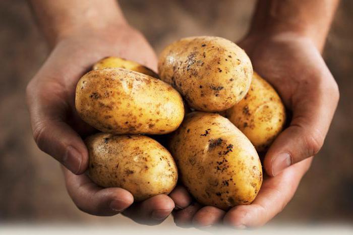 Сколько калорий в вареной картошке